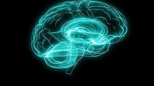 设计的大脑