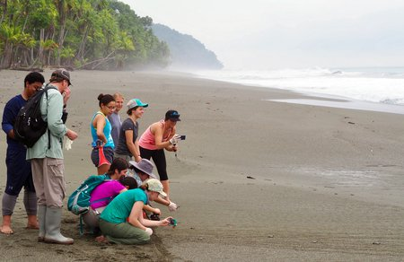 In Costa Rica, students take pictures of baby green sea turtles making their way to the ocean.