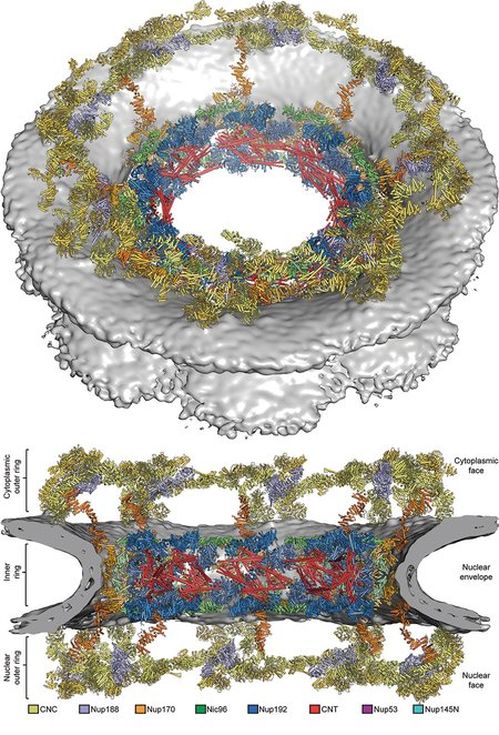 composite structure of the symmetric core of the nuclear pore complex