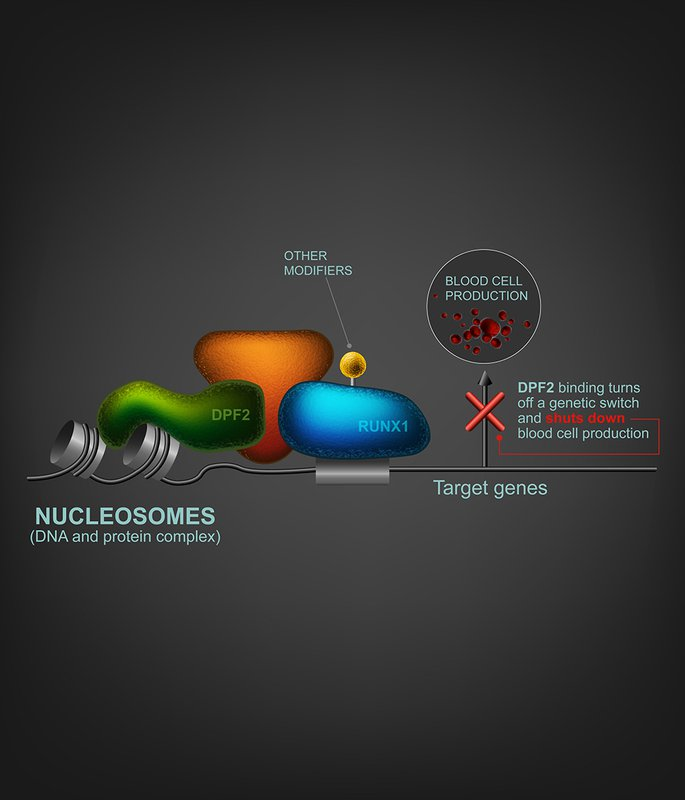 Diagram of DPF2 in cell