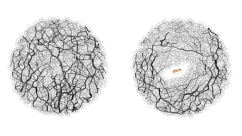 A diagram on the left shows grains of sands with a black web of criss crossing lines. A diagram on the right shows that the lines are now encircling a tunnel dug by an ant.