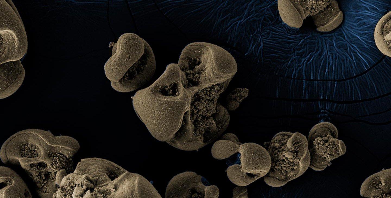 Scanning electron micrographs of manganese nodules.