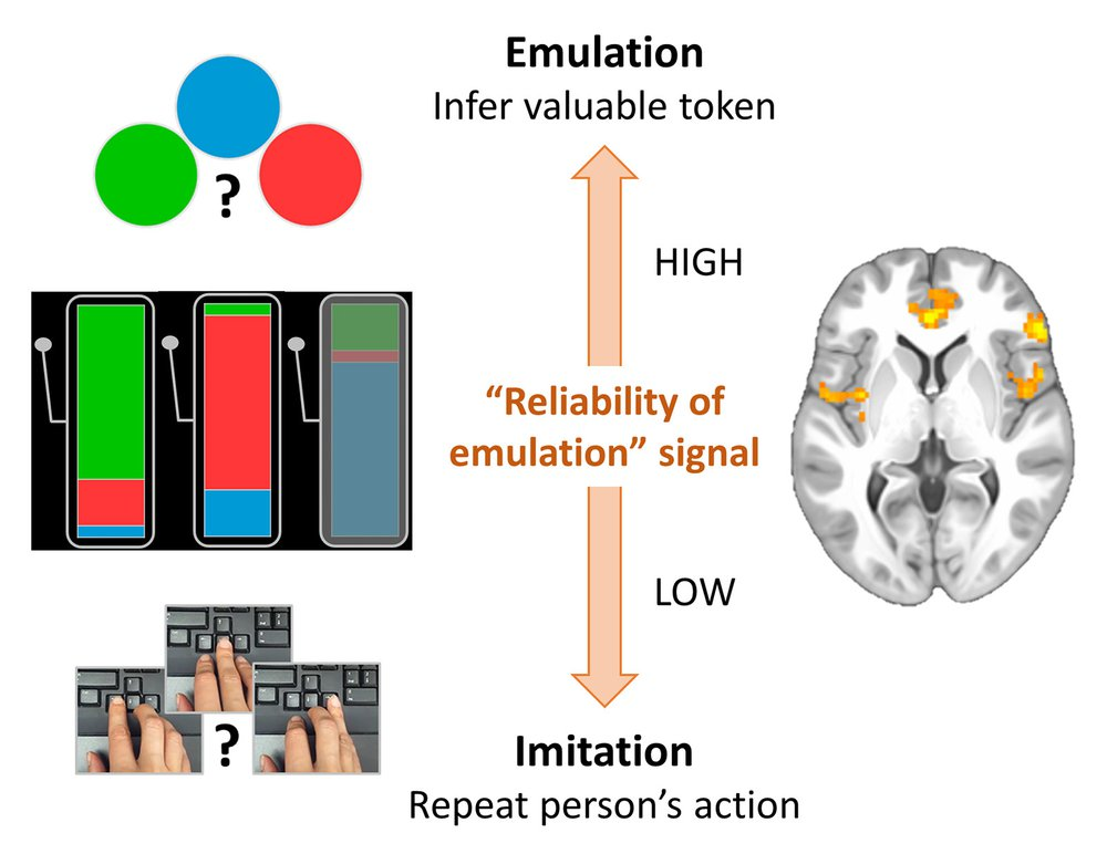 A diagram showing how the brain chooses between two observational-learning strategies.