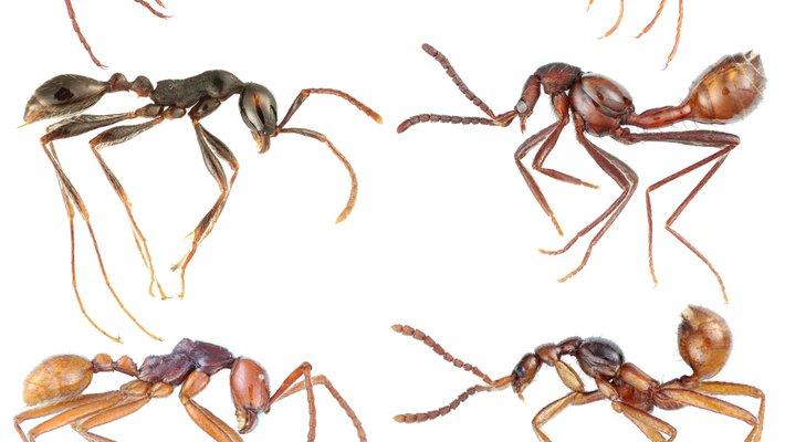 Closeup of ants.
