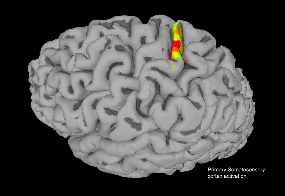 fMRI of a brain