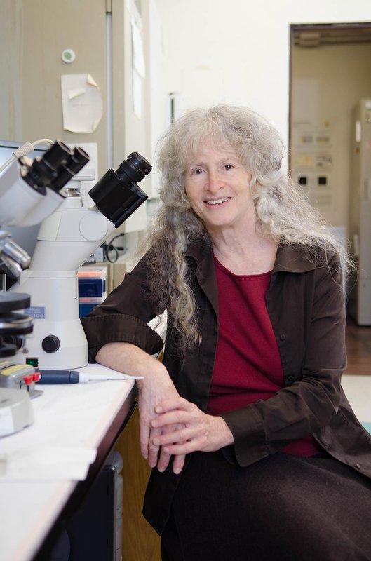 Caltech biologist Ellen Rothenberg