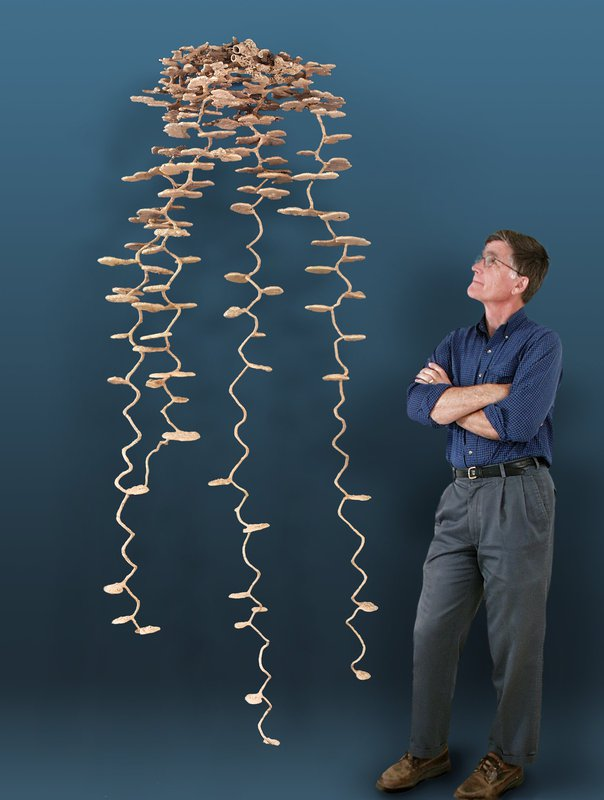 A man stands with his arms crossed looking up at a casting of an ant nest that has been removed from the ground.. The ant nest is taller than him