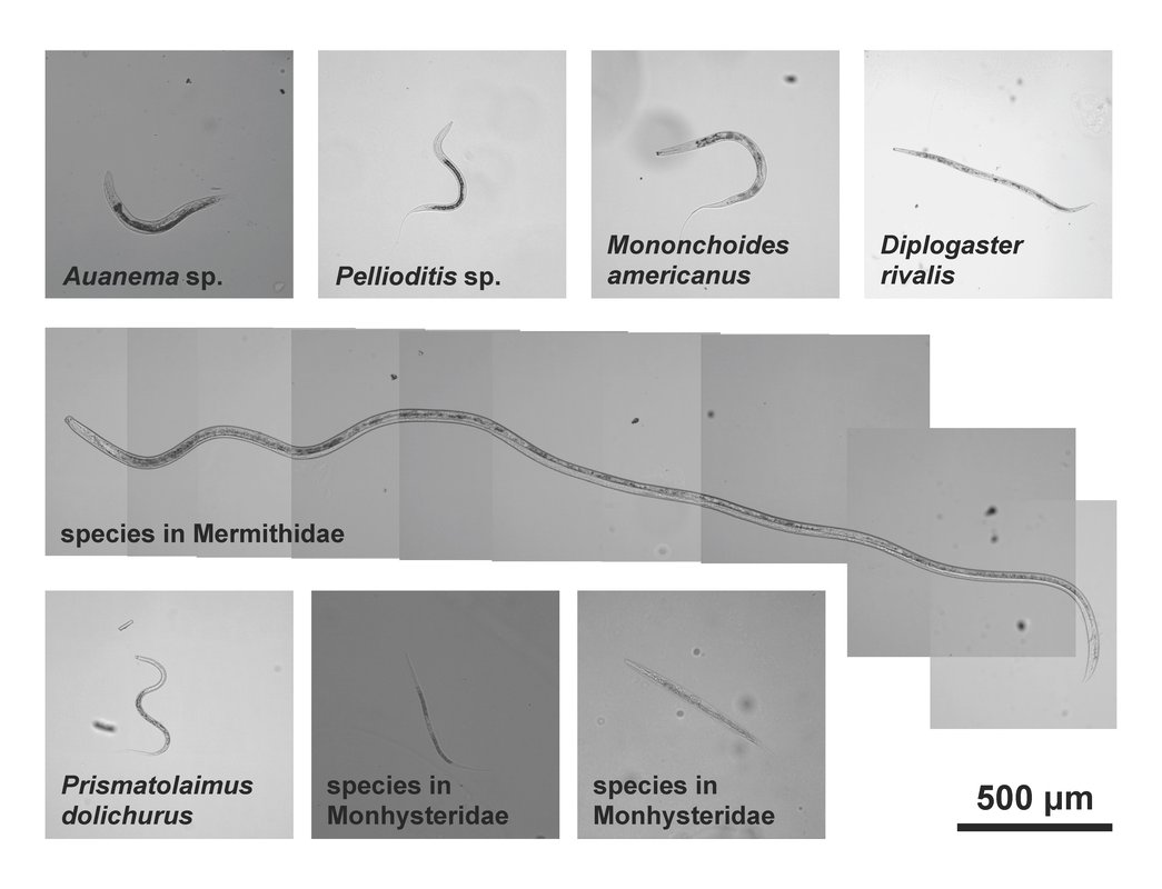 Eight different small worms