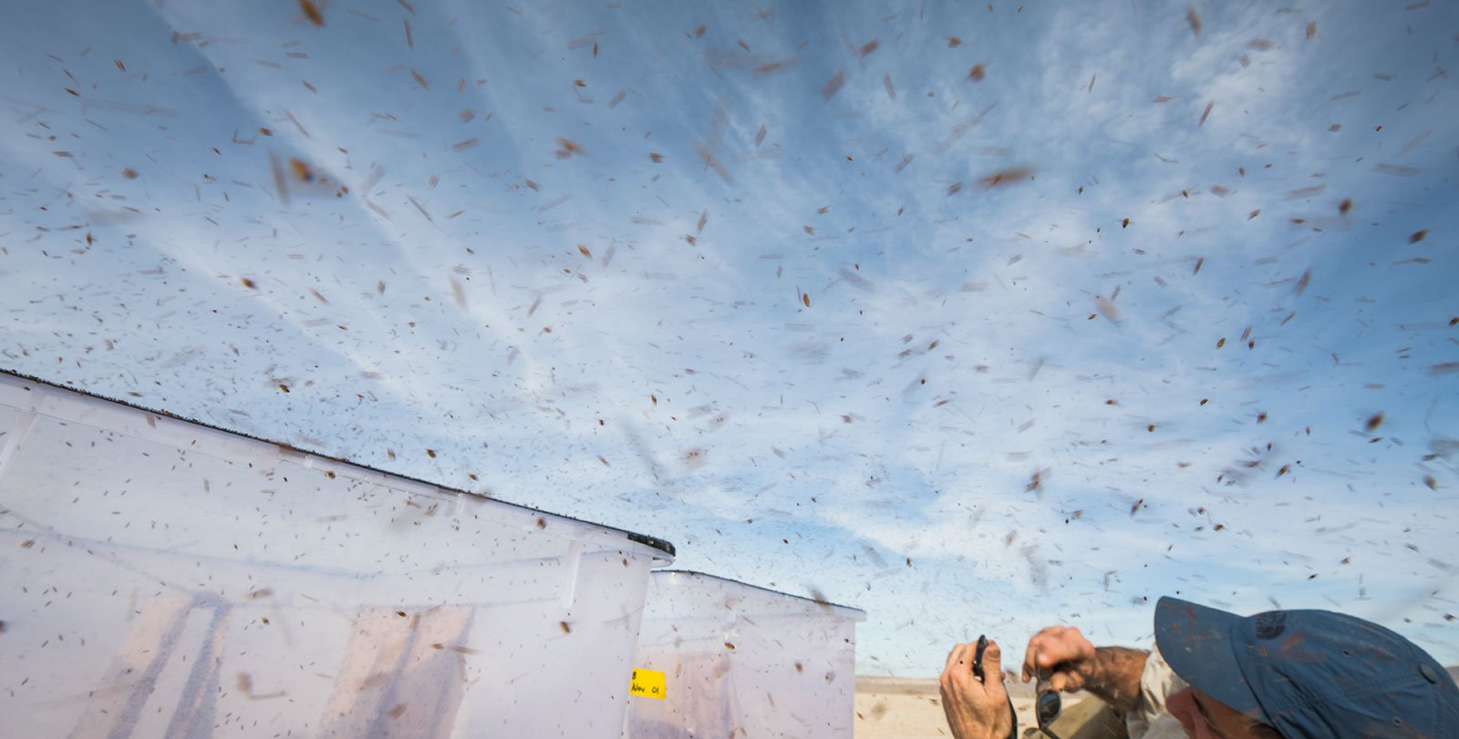 Thousands of fruit flies exit a bucket on a dry lakebed